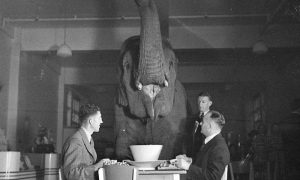 Bad Web Content is the Elephant in the room